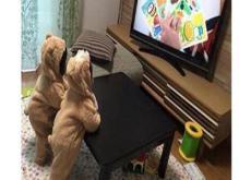 2019年5月20日搞笑段子合集:两只小熊