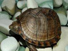 乌龟养在家里是霉运还是好运