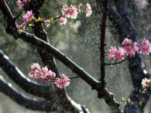 春游踏青背诵上几首应景的关于描写春天的古诗 春色无边更鲜活
