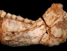 摩洛哥发现的智人化石_智人化石是什么有什么用