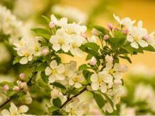 描写春天景色的诗句,用唯美意境告诉你们春天的美